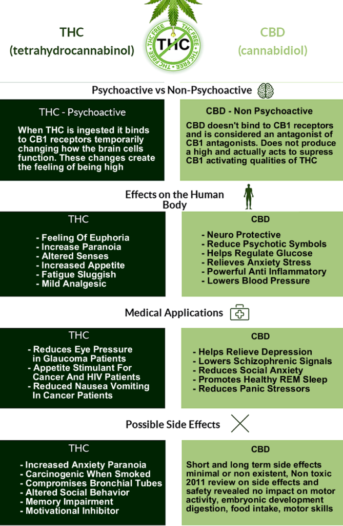 cbd-oil-infographic